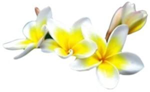 Thai-Flower1